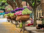 Les fleurs et leur histoire