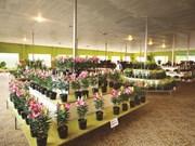 Rung hoa Dà Lat, fer de lance de l'horticulture high-tech