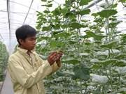 Bientôt le Festival international de l'agriculture du delta du Mékong à Cân Tho