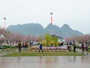 Rendez-vous en mars pour la Fête du cerisier et de l'abricotier de Yên Tu