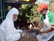 Surveillance renforcée pour détecter précocement les cas de grippe aviaire sur les êtres humains
