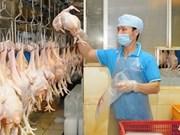Dông Nai : les éleveurs commencent à exporter leurs poulets au Japon