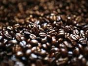 Exportation de 273.000 tonnes de café en janvier et février
