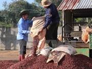 Dak Lak promeut son café produit sous l'IG de «Buôn Mê Thuôt» à l'internationale