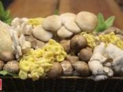Le succès des champignons d'Ideal Foods Vietnam