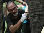 Un Néerlandais au chevet des derniers éléphants vietnamiens