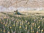 Kawasaki Flora Auction Market veut investir dans la floriculture à Lâm Dông