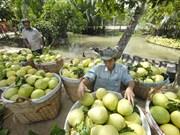 1er trimestre : les exportations vietnamiennes de fruits et légumes sur leur lancée