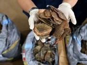 Malaisie : saisie du plus grand volume d'écailles de pangolins jusqu'à présent