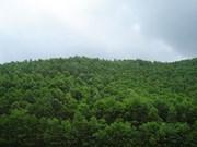 90.700 hectares supplémentaires de forêts au premier semestre 2017