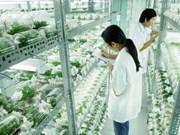 Agriculture high-tech: Binh Phuoc veut acquérir des expériences japonaises
