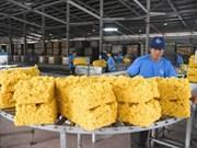 Bond des exportations nationales de caoutchouc depuis janvier