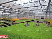 De nombreux obstacles pour le développement d'une agriculture high-tech