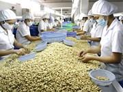 Noix de cajou: le Vietnam, leader mondial pour la 12ème année consécutive
