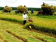 En 2020, le revenu des ruraux augmenterait d'au moins 1,8 fois par rapport à 2015