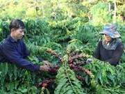Lam Dong célèbre la première Journée du café du Vietnam