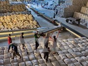 Le Vietnam pourrait exporter 6 millions de tonnes de riz en 2017