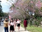 Six routes portant les noms des espèces florales à Dà Lat