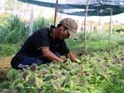 Le Japon finance un projet d'agriculture bio à Ben Tre