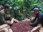 Vietnam et Indonésie veulent impulser leur coopération dans le secteur du café