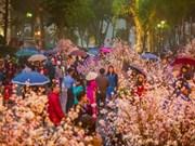Un festival des fleurs de cerisier prévu à Hanoi en mars