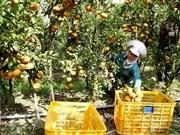Agriculture : objectif de plus de 21 milliards d'exportation en 2018