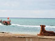 Des chiens sur l'archipel de Truong Sa