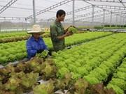Culture hydroponique bio: le Vietnam transfert des technologies à Singapour