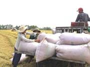 De belles perspectives pour les exportations nationales de riz