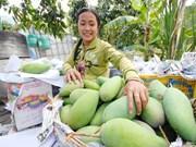 An Giang: un premier lot de mangue tricolore expédié en Australie
