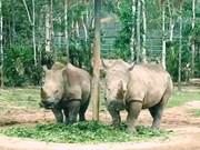 Lancement d'un concours de courts-métrages sur le commerce illégal des espèces sauvages