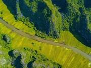 La beauté de la saison du riz mûr vue du toit de la grotte Mua (Ninh Binh)