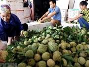 La semaine des pommes cannelles et des spécialités de Lang Son attendue en août