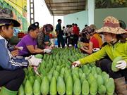 Son La atteint une percée dans l'exportation des produits agricoles