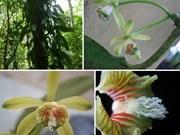 De nouvelles espèces végétales découvertes dans la réserve naturelle de Khanh Hoa
