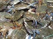 Le Japon, 3e débouché pour les crabes et crustacés vietnamiens
