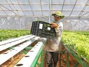Ha Nam: une compagnie japonaise envisage d'investir dans la production de légumes bio