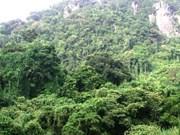 Thua Thiên-Huê: 5 milliards de dôngs pour le projet «Forêt tropicale humide»