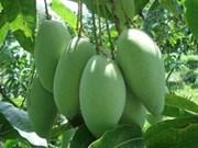 Elargissement des débouchés pour les fruits vietnamiens