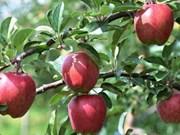 Signature d'un accord d'exportation de pommes polonaises vers le Vietnam