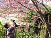 L'Association d'Amitié de Fukushima offre 161 cerisiers à Hanoi