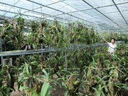 Une région de culture d'orchidées de hautes technologies