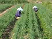 Les coopératives contribuent à la valorisation des produits agricoles