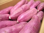 Singapour : les patates douces cultivées au Vietnam sont sûres