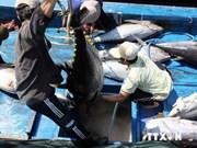 Bonnes perspectives pour l'export de thon  grâce au TPP
