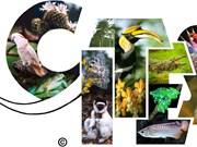 Le Vietnam organisera la 3e conférence sur le trafic d'espèces sauvages