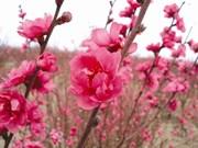 Inventaire des six fleurs les plus en vue du Têt
