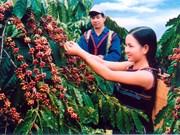 Un projet sur l'agriculture durable démarre à Hâu Giang