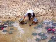 Sécheresse et salinisation : l'état des lieux dans 13 provinces vietnamiennes