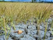 Coopération Vietnam-Allemagne dans la résilience au changement climatique